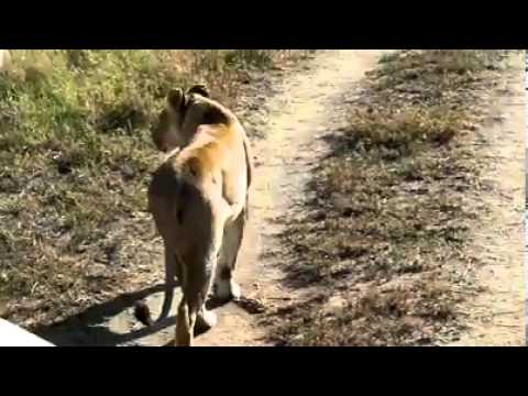 Masai tradition.flv