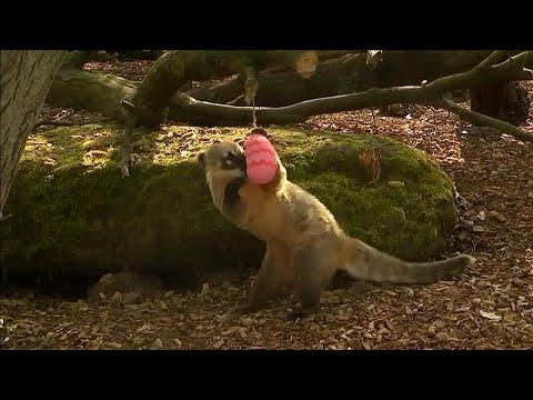 شاهد: حديقة في لندن تنتقي بعناية وجبات لحيواناتها بمناسبة عيد الفصح…  - نشر قبل 35 دقيقة