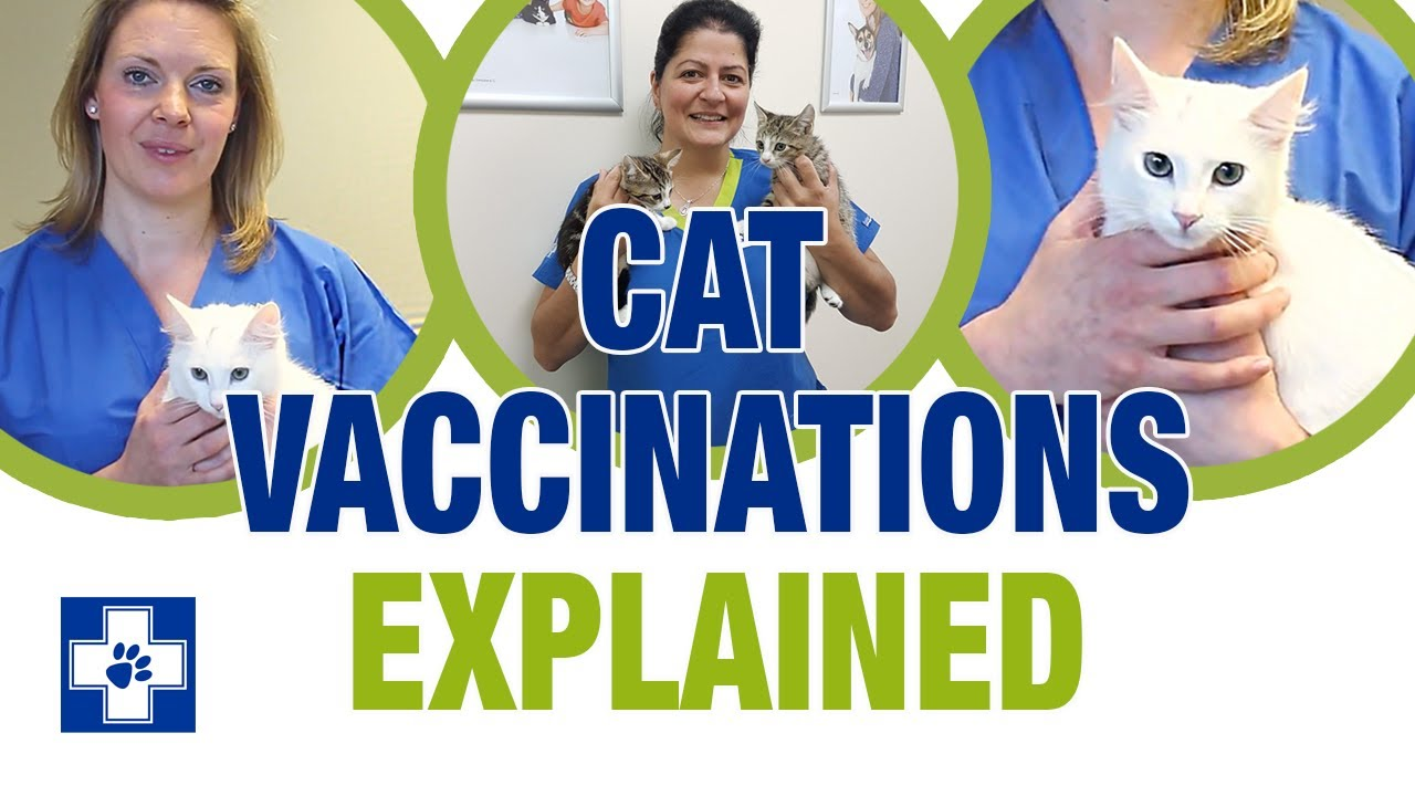 Cat Vaccinations Low Cost Cat Vaccinations White Cross Vets
