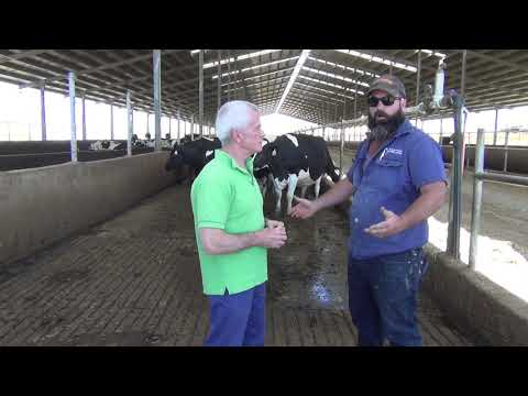 Inspirational Dairy Farmer In South Australia