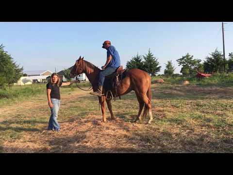 Sorrel horse for sale