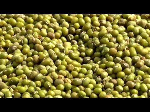 Burkina faso, Une nouvelle céréale dans l'agriculture