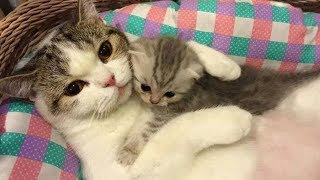 Cute is Not Enough - Funny Cats and Dogs Compilation #90