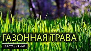 Посев газонной травы / как посадить газон?(, 2015-02-23T05:01:00.000Z)