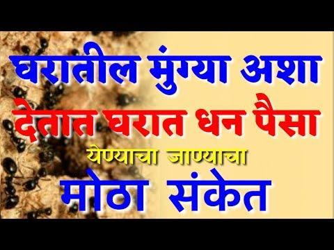 घरात मुंग्या अश्याप्रकारे देतात धन व पैसा येण्याचा व जाण्याचा मोठा संकेत | Marathi Vastu Shastra Tip