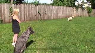 Top Dog Training, Dog Training Secrets