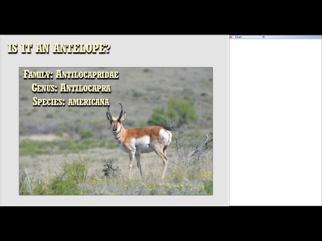 Pronghorn Restoration in the Trans Pecos: Where Do We Stand - Wildlife for Lunch - April 2017
