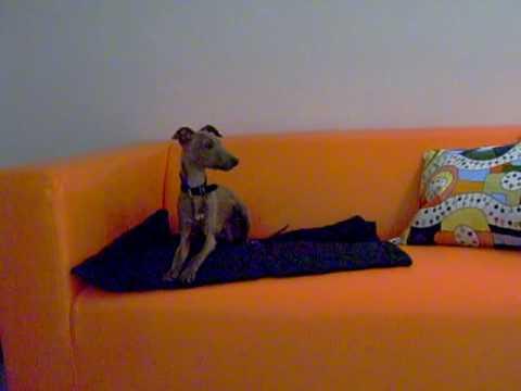 Goethe incontra divano ikea youtube - Goethe divano occidentale orientale ...