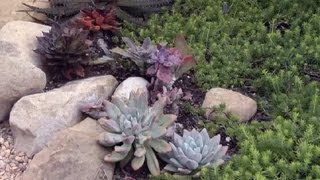 Succulent Landscaping : Gardening Advice