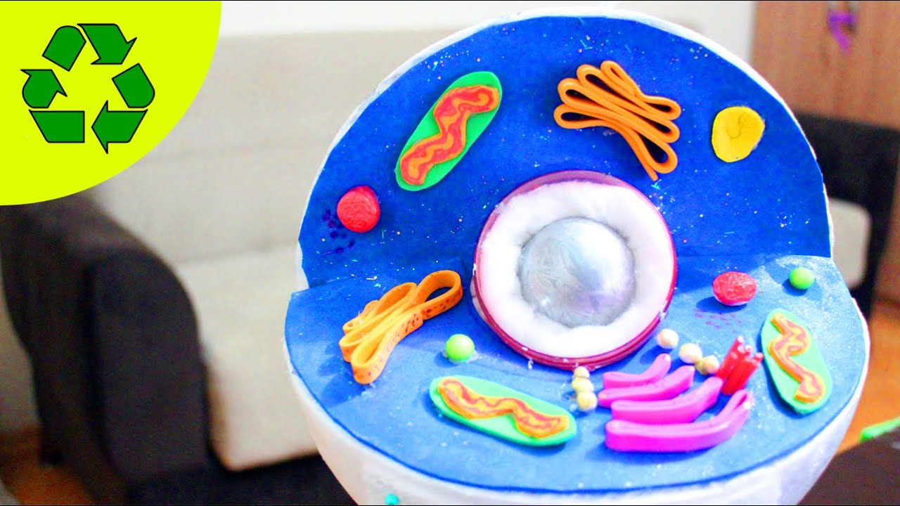 3d animal cell model my son won first place i can t believe it simplekidscrafts [ 1280 x 720 Pixel ]