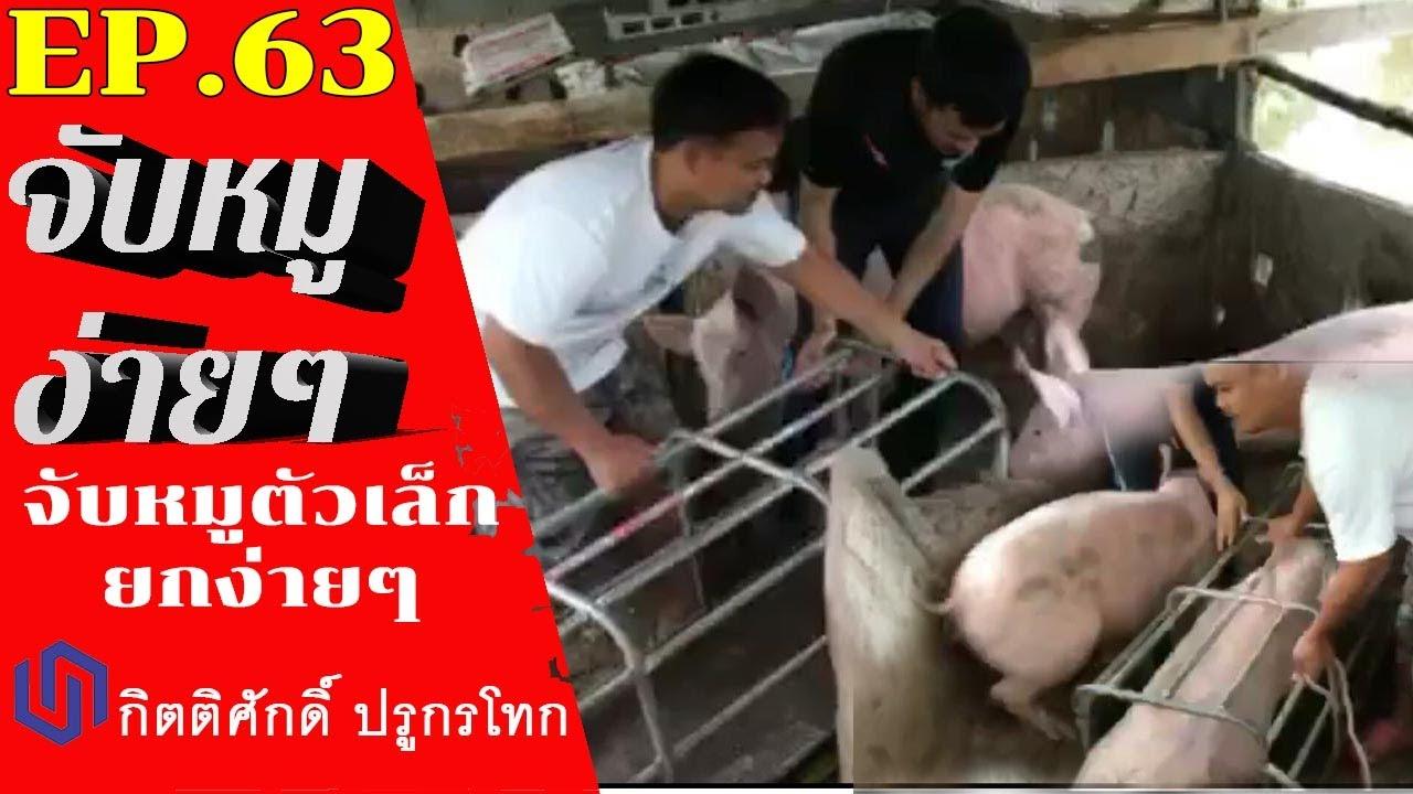วิธีการจับหมู:จับหมูตัวเล็กยกง่ายๆ Pig EP:63 How to catch a pig easily
