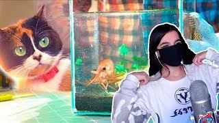 TenderlyBae смотрит:МЫ СОЗДАЕМ ПОДВОДНЫЙ ТЕРРАРИУМ!Террариум для рыбок Своими руками!)