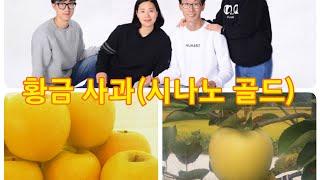 사과나무 전지 전정( 시나노 골드 전정 키큰 방추형 재…