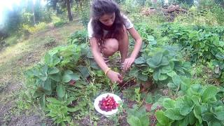 цветы и ягоды Сибирь 17