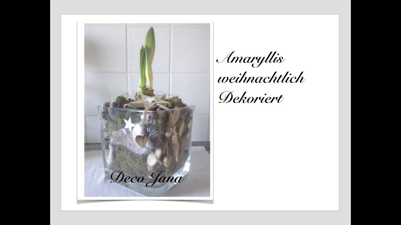 DIY: Amaryllis Weihnachtsdeko Edel Und Dekorativ (How To