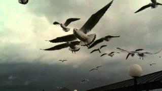 Eine zum Himmel schreiende Vögelei