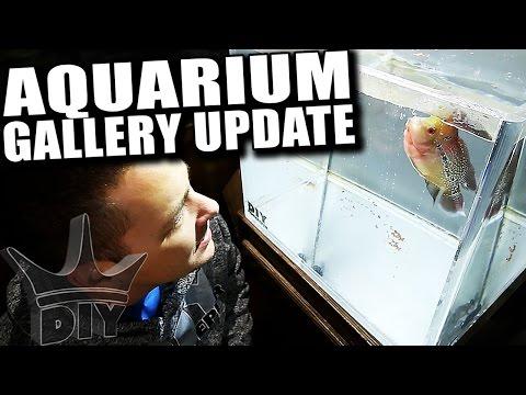 MY AQUARIUM GALLERY - 1st update