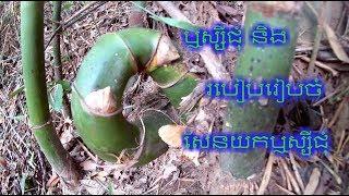 របៀបរៀបចំសែនយកឬស្សីជុំ | Magic bamboo of khmer Part  03