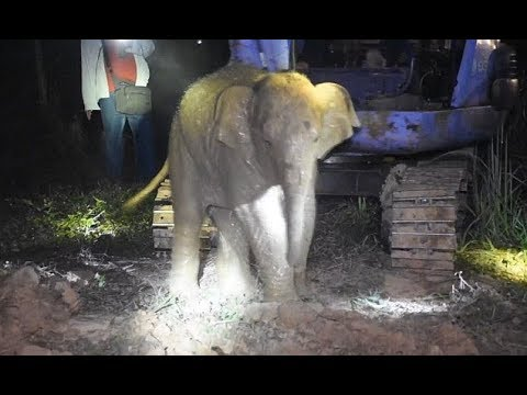Elephant r escued after falling down well in Thailand