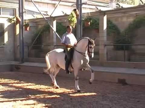 Pure Carthusian Andalusian PRE Stallion Nr 447 - WWW.HORSESPRE.COM -