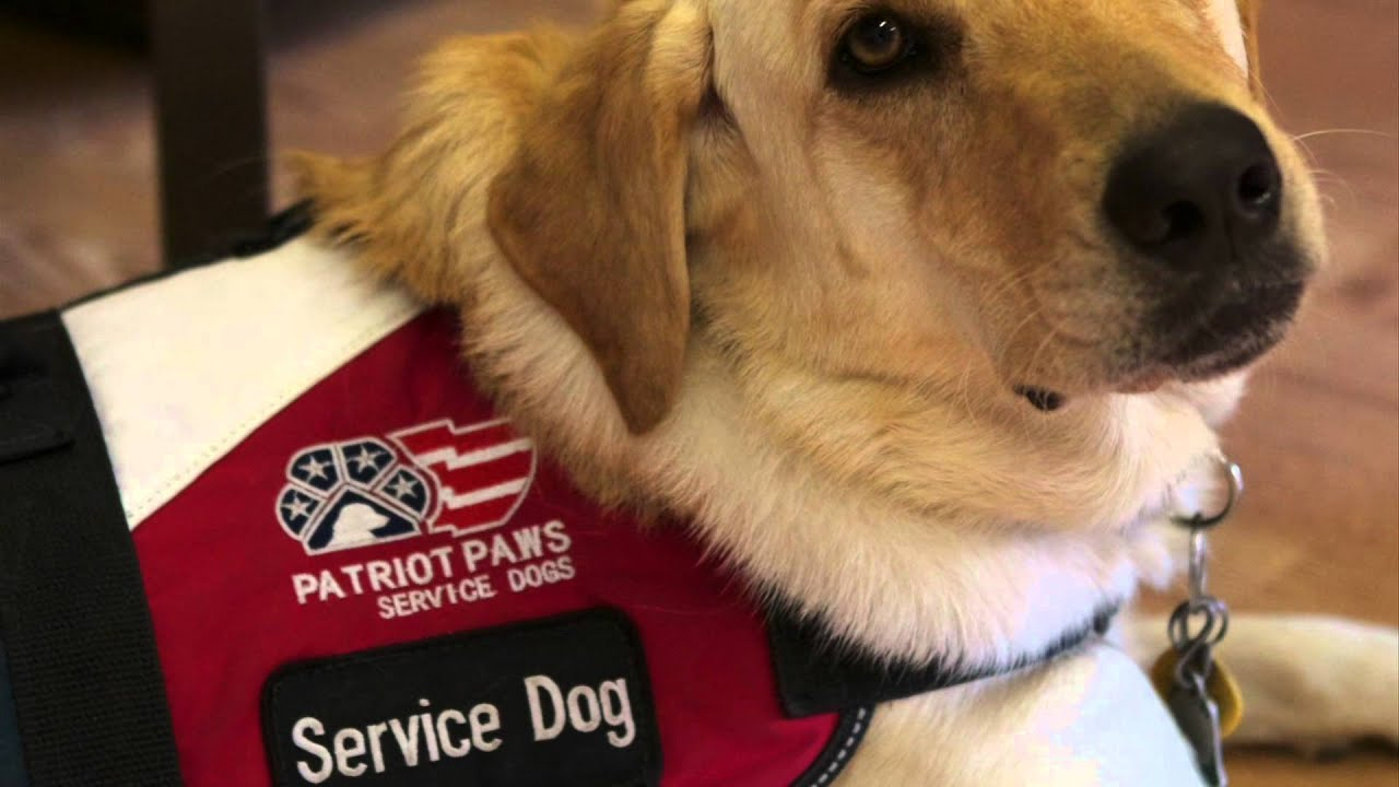 Paws In Service:  Service and Therapy Dogs Helping Disabled Veterans