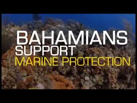 Sea The Future With Bahamas Protected