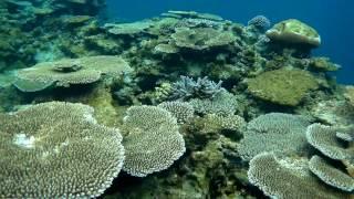 池間島・宮古島 美しい珊瑚礁でシュノーケル 旅の様子はこちらをチェッ...