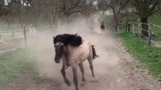 Pferdehof Birkenweiler, unsere Pferde, Ponys und Esel kommen von der der Weide