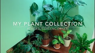 My Plant Collection | Houseplant Tour Fall 2017