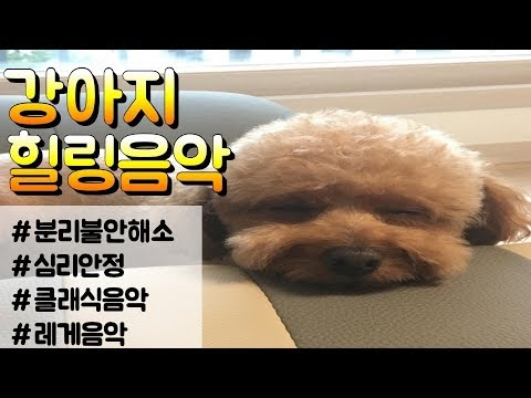 [12시간/광고X]강아지가 좋아하는 음악/강아지 수면음악/강아지 힐링음악/혼자두고 외출할때 틀어주세요/분리불안 완화/수면유도/오르골자장가(Dog Cat healing music)