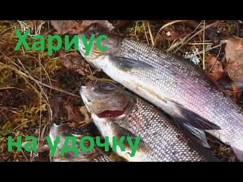 рыбалка в красноярске на енисее хариуса