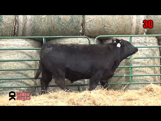 Kaiser Angus Ranch Lot 30