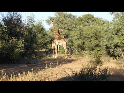 Marakele National Park - Bontle Rest Camp - Zuid Afrika