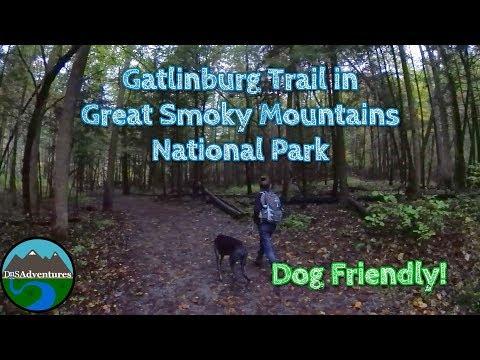 Hiking || Dog Friendly Gatlinburg Trail || Great Smoky Mountains National Park