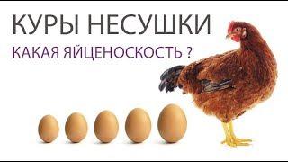 КАКИЕ ЯЙЦА НЕСУТ КУРЫ НЕСУШКИ ЛОМАН БРАУН (часть 6) \ Яйценоскость - чем кормить кур и размеры яиц