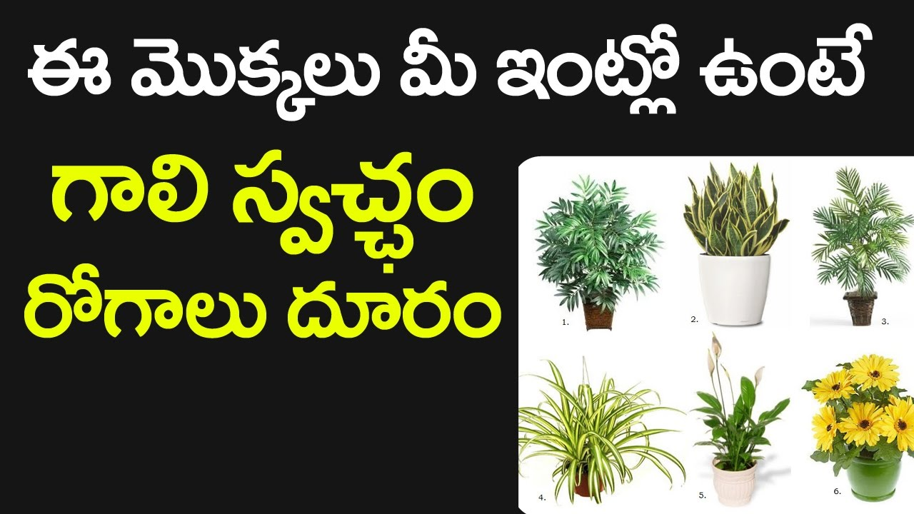 WOW! Air Purifier PLANTS to PURIFY Polluted AIR | Aloe Vera | Chrysanthemum Name Purifying Houseplants on tall houseplants, tropical houseplants, indoor houseplants, cactus houseplants,