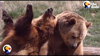 Wild Animals Experience LOVE and Freedom For the FIRST TIME | The Dodo