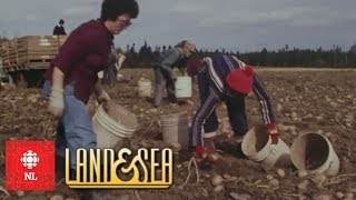 Land & Sea: The Parsons family: farmers and foster parents