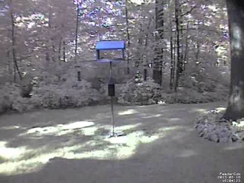 Feedercam Capture (2013-09-18)