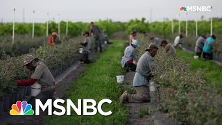 The Real Reason Grocery Shelves Are Empty | All In | MSNBC