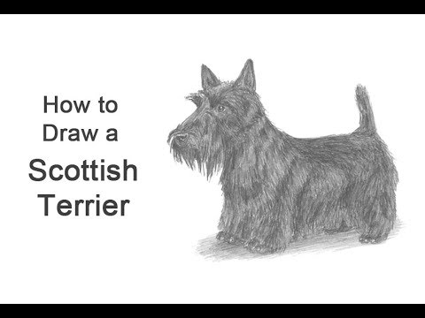 How to Draw a Dog (Scottish Terrier)