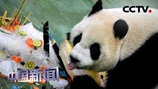 [中国新闻] 大熊猫圆仔满6岁 台北市立动物园办派对庆生 | CCTV中文国际
