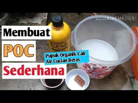 how-to-make-organic-fertilizer-water-wash-rice-simple-#fertilizer-#poc