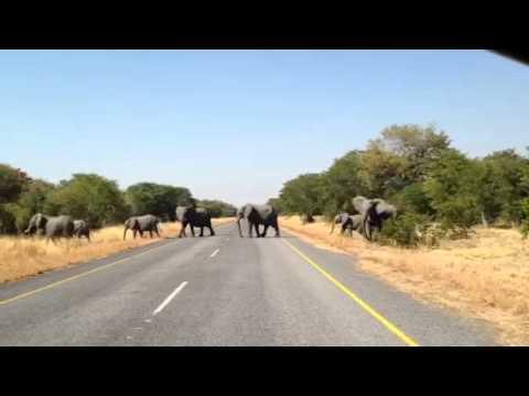 An Elephant Encounter in Botswana's Chobe National Park