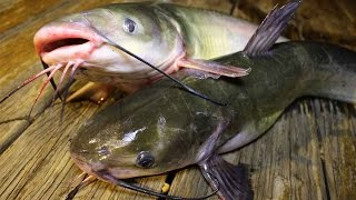 How to catch catfish - How to cook catfish - How to clean catfish