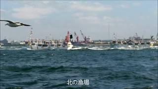 詳しい説明はいりませんね。動画は稚内漁港を出漁する漁船団です。20170...
