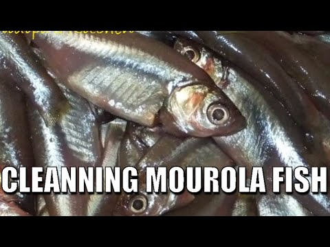 HOW TO CLEAN MOUROLA FISH BY HAND (MOST EASY WAY) FOR COOKING
