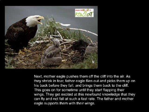 The Seven Principles of an Eagle