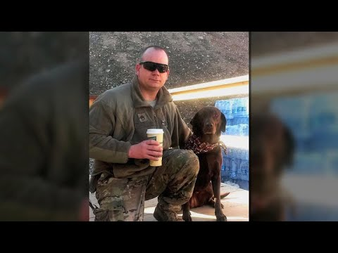 Retired military dogs recognized for their service
