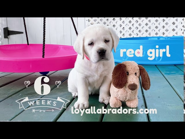 A puppy video ~ Bear x Ace Litter 2020